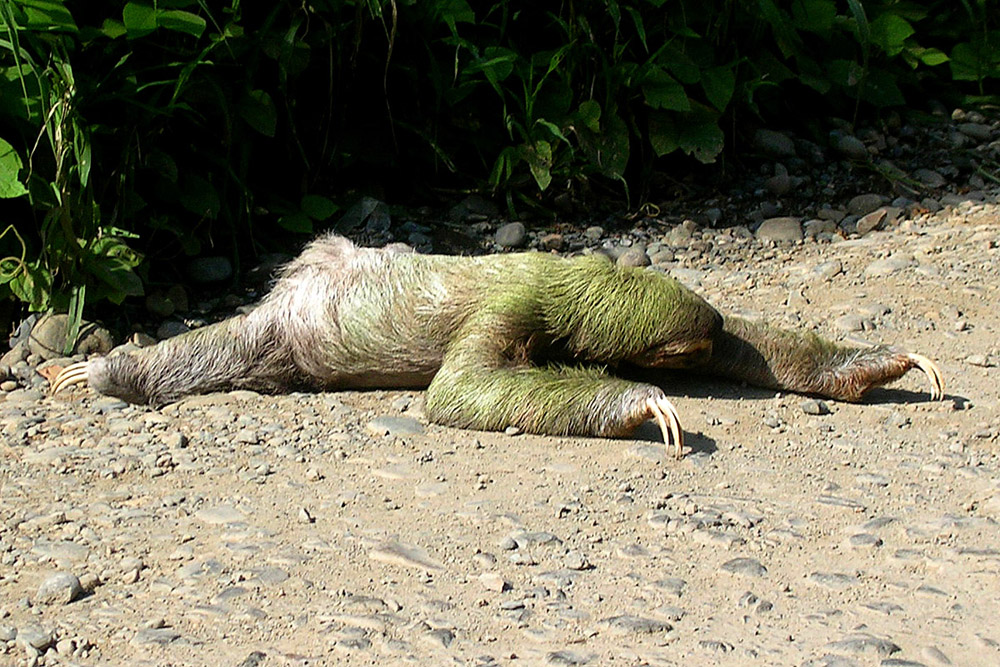 Image Gallery dead sloth